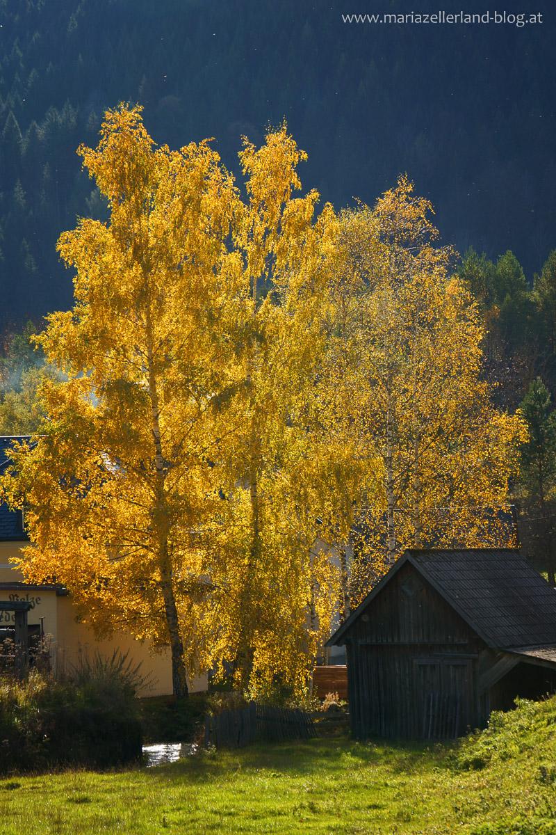 Goldener_Herbst_Mariazell_DSC02228