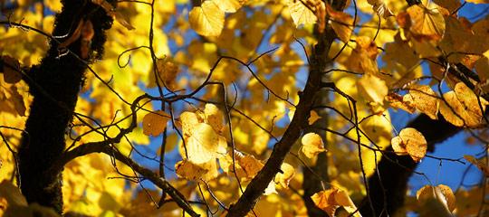 Herbst-Mariazell_DSC02224