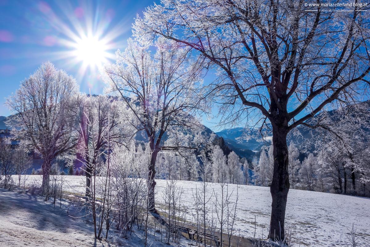 Baum-Himmel-Sonne-Strahlen