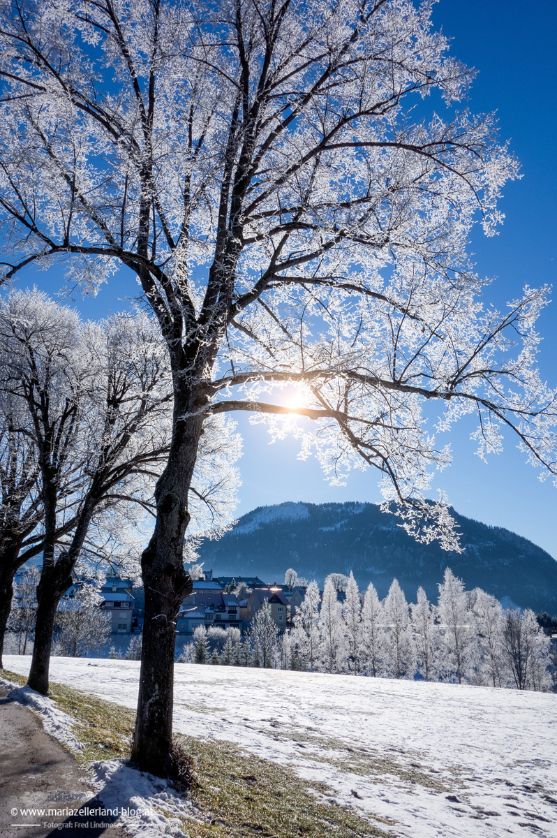 Baum-Himmel-Sonne
