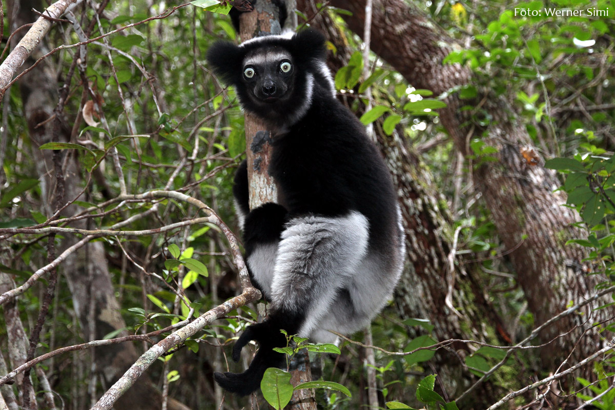 Madagaskar_Werner-Simi_1