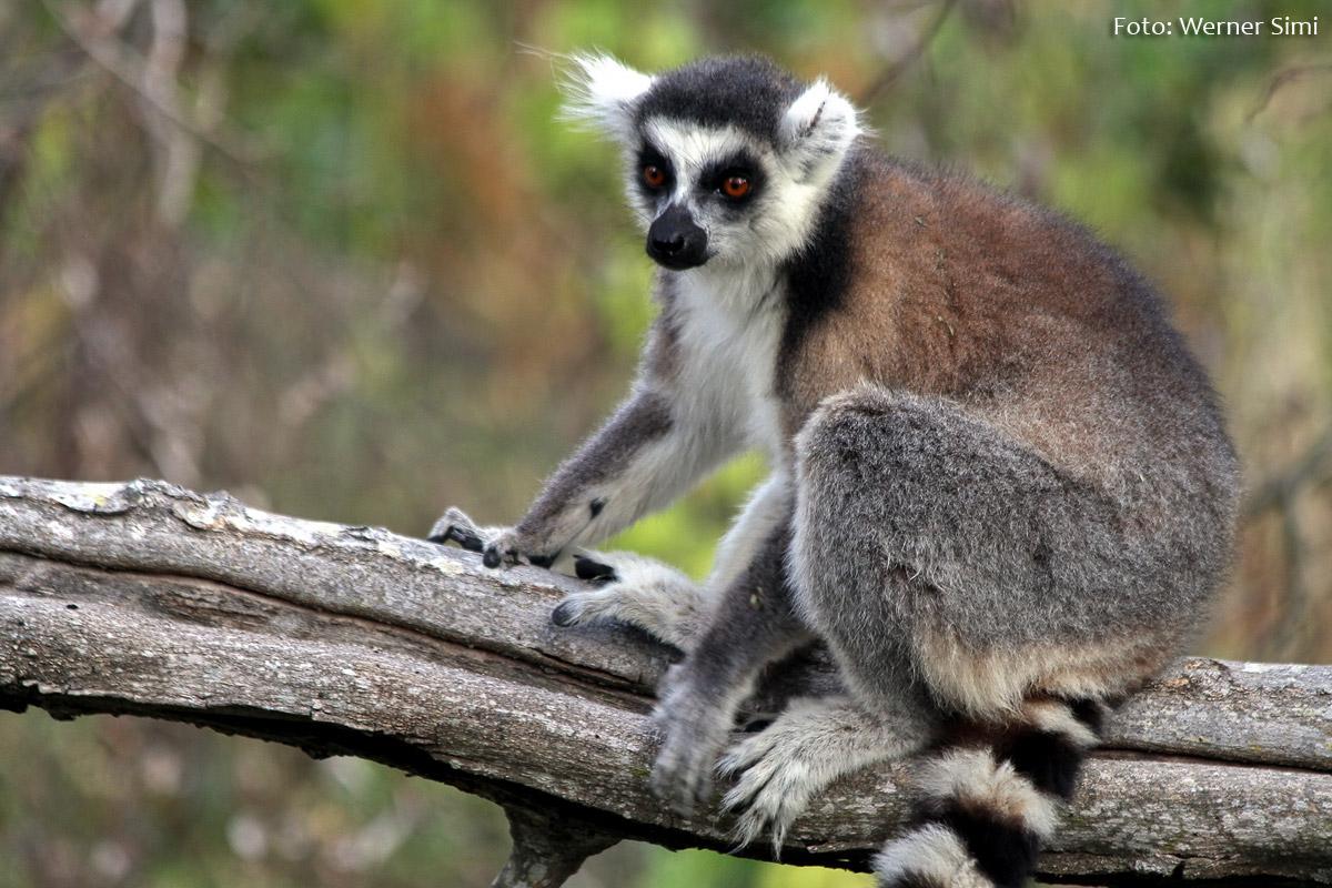 Madagaskar_Werner-Simi_2