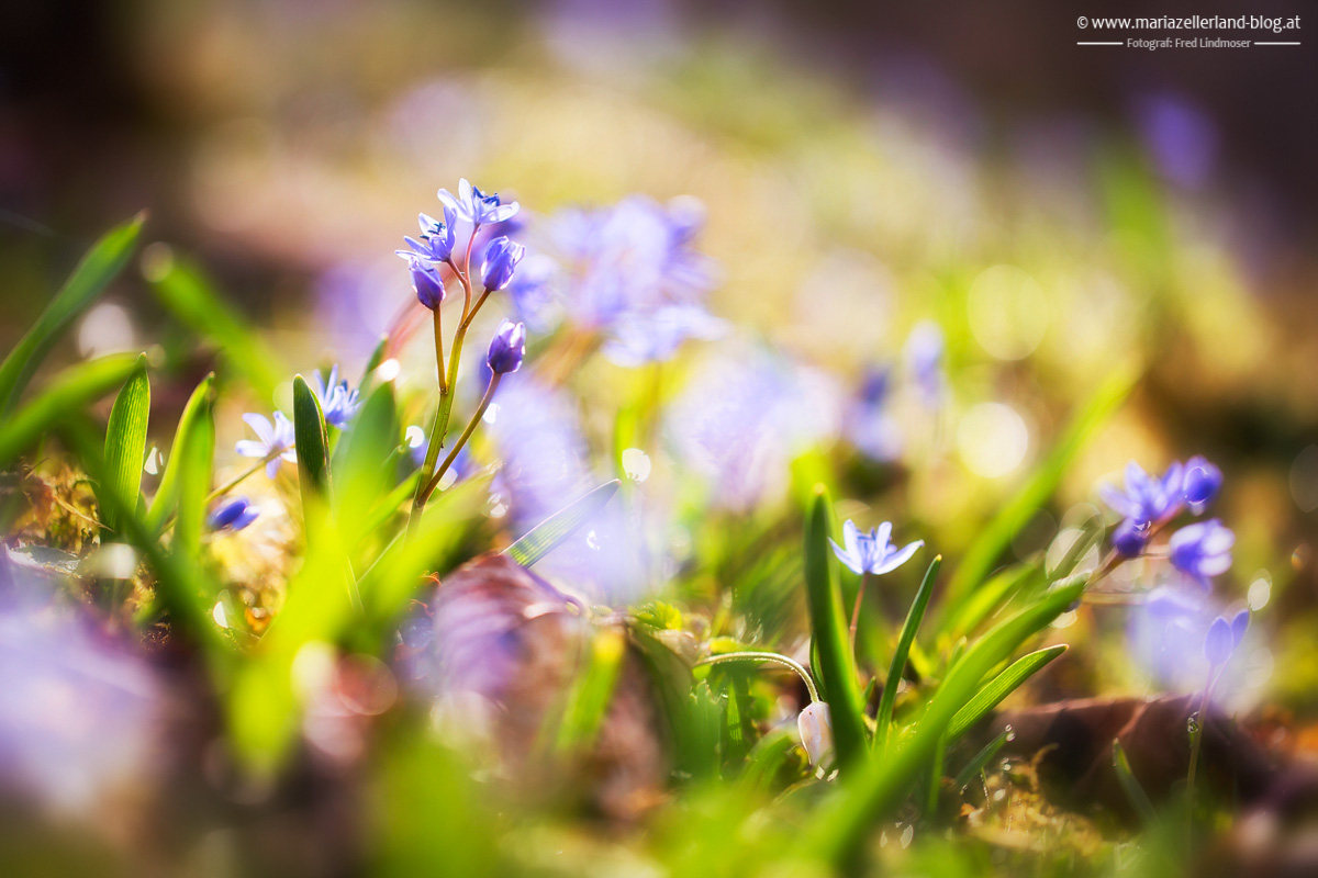 Blaustern_-IMG_8514