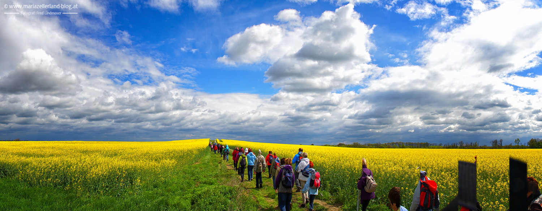 Rapsfeld-Pilgerwanderung