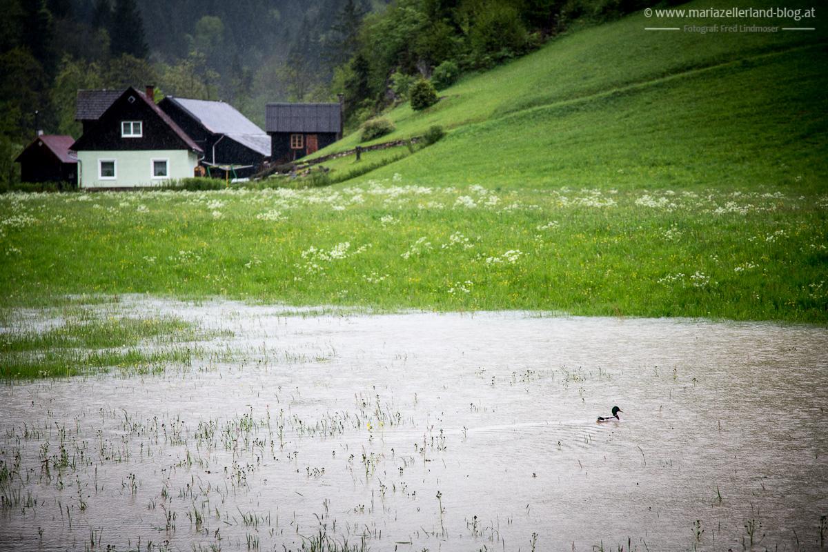 Hochwasser_Mai_2014_Mariazell_IMG_0923
