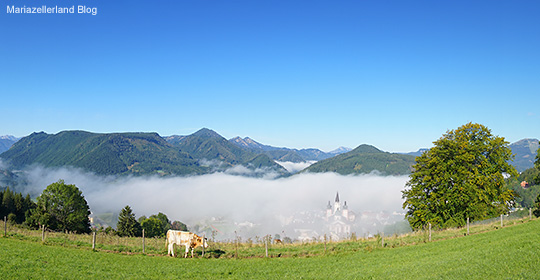 Herbst-Mariazell-Basilika-Morgennebel - 28. August 2014