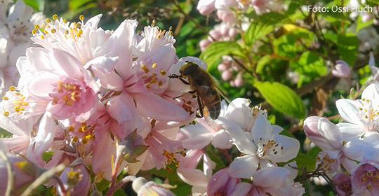 Sommerblüte-Fluch-Ossi_2014-06-22-Titel