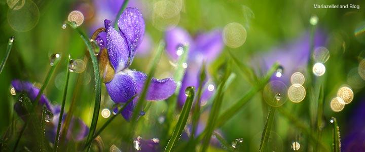 Wiesenblumen-im-Morgentau_DSC00306