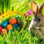 Frohe Ostern 2018 wünscht der Mariazellerland Blog