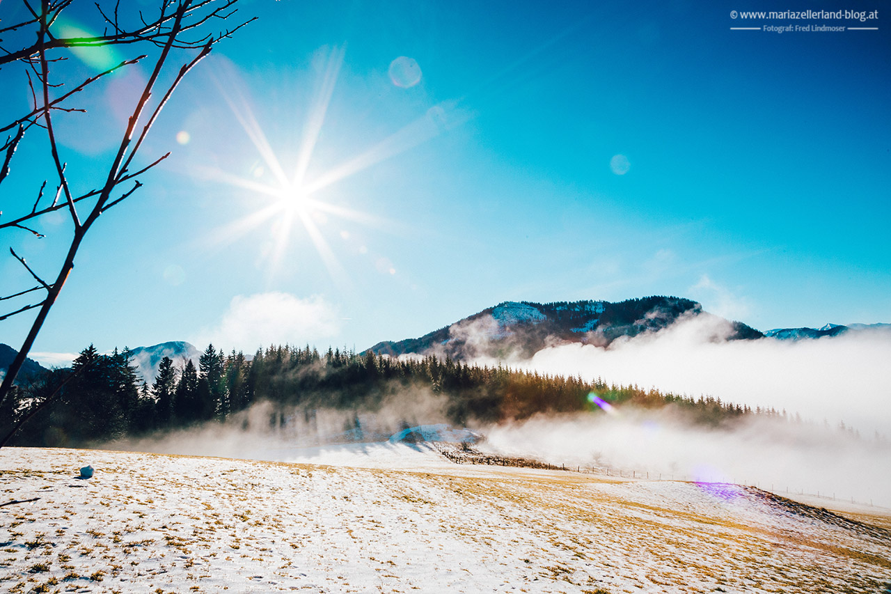 Mariazell-Winter-Nebel-Basilika-8169