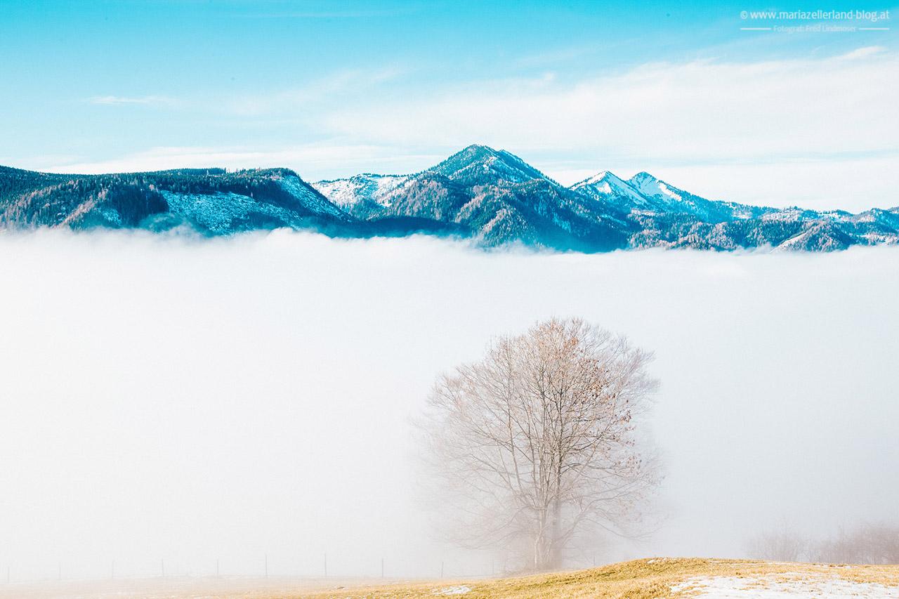 Mariazell-Winter-Nebel-Basilika-8176