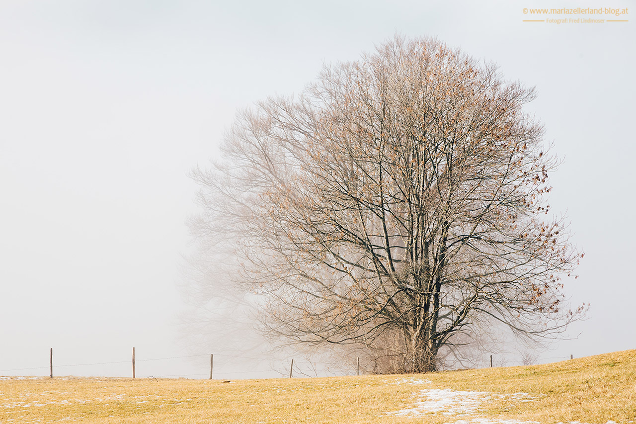Mariazell-Winter-Nebel-Basilika-8198