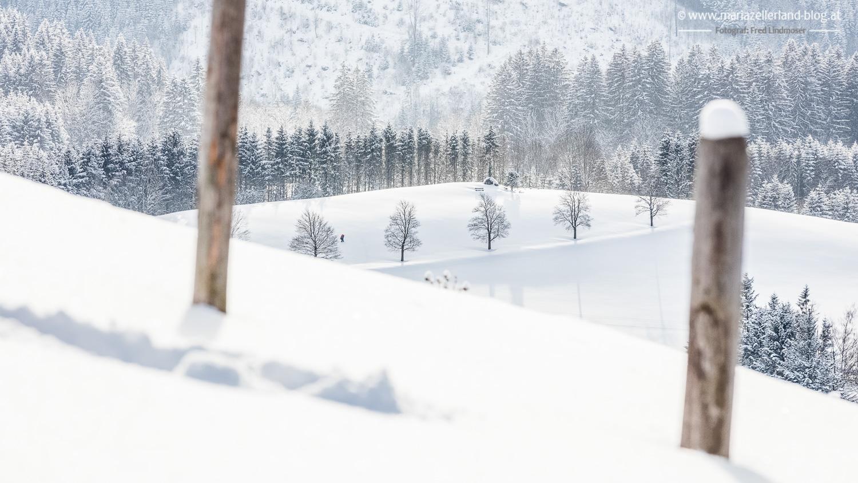 Winterlandschaft Mariazell 18012016-2686