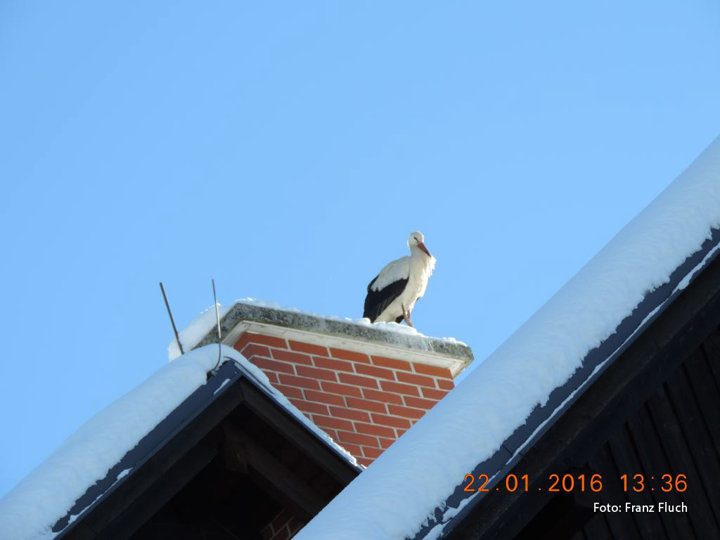 winterstorch_Mariazell_2016_7