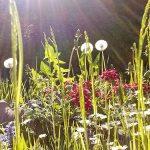 Bild der Woche: Sommerwiese im Mariazellerland