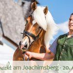 Termintipp: Haflingermarkt am Joachimsberg – 20.8.2016