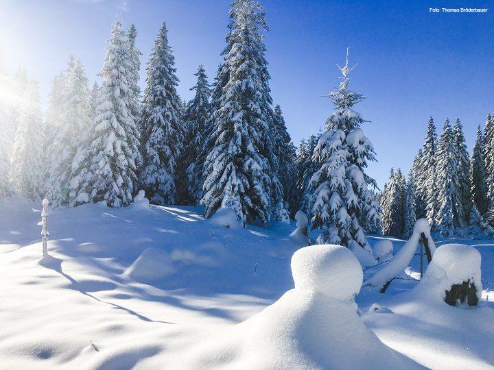 winter-mariazellerland_2706
