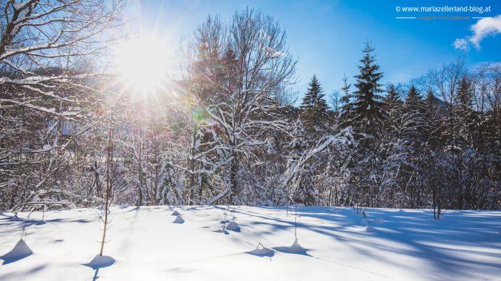 winterlandschaft-mariazell-jan2017-0851