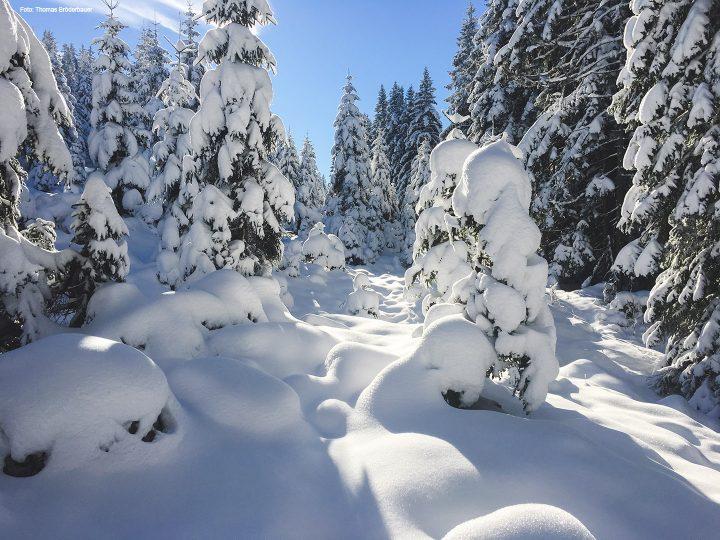 winterlandschaft-mariazellerland_2710