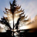 Bild der Woche: Sonnenstrahlen