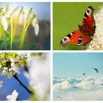 Bild der Woche: Sehnsucht nach Frühling
