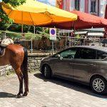 Bild der Woche: Pferdeparkplatz