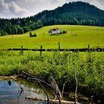 Bild der Woche: Sommer in der Mooshuben