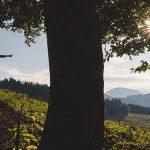 Wanderrunde | Seebergsattel-Seeleiten-Graualm-Brandhof