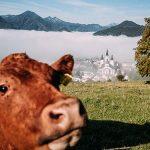 Mariazell - Herbstzeit oberhalb der Nebelgrenze