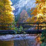 Bild der Woche: Goldener Herbst