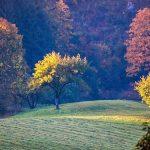 Bild der Woche: Herbstfarben