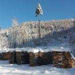 Bild der Woche: Wintertraum