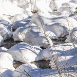 """Bild der Woche: """"Schneeschaum"""""""