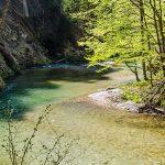 Bild der Woche: Frühling im Klausgraben