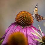 Bild der Woche: Schmetterling
