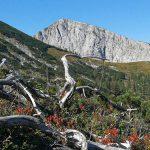 Bild der Woche: Graualm mit Blick auf Hohe Weichsel