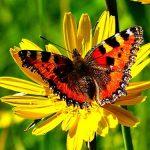 Bild der Woche: Bunter Schmetterling