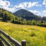 Sommer im Mariazellerland 2020 - Fotos