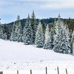 Bild der Woche: Winterlandschaft