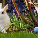 Frohe Ostern 2021 wünscht der Mariazellerland Blog