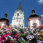 Bild der Woche: Blumenpracht in Mariazell