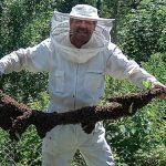 Bild der Woche: Bienenschwarm eingefangen