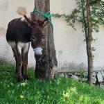 Bild der Woche: Tierischer Wallfahrer in Mariazell